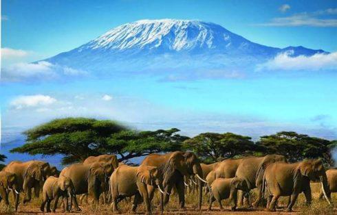 Amboseli Elefanti