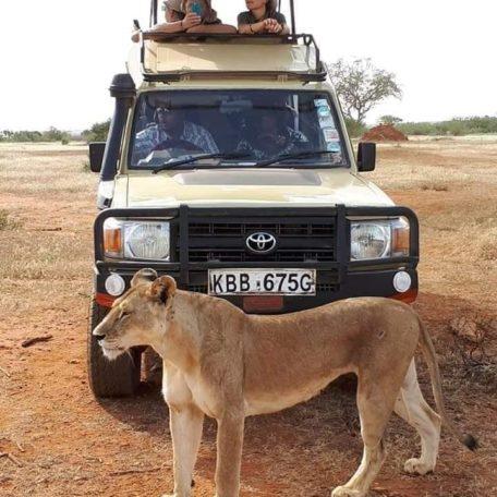 Macchina Safari Leone