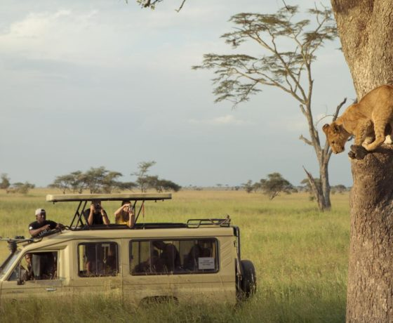 Safari Leoni