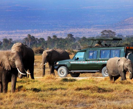 Safari Auto Elefanti